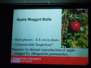 apple maggot balls