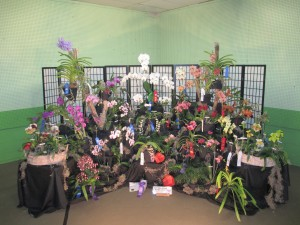 Iowa orchid winners in Chicago