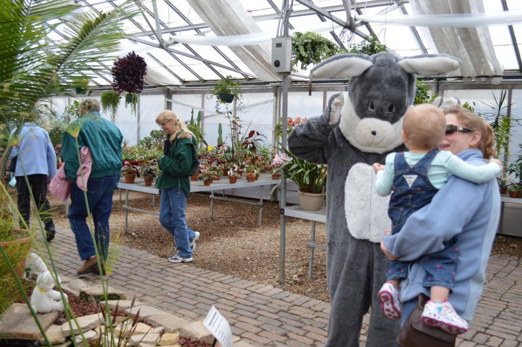 The Easter bunny makes the rounds at the Noelridge Greenhouse in Cedar Rapids, Iowa, on Saturday, March 30, 2013. (photo/Cindy Hadish)