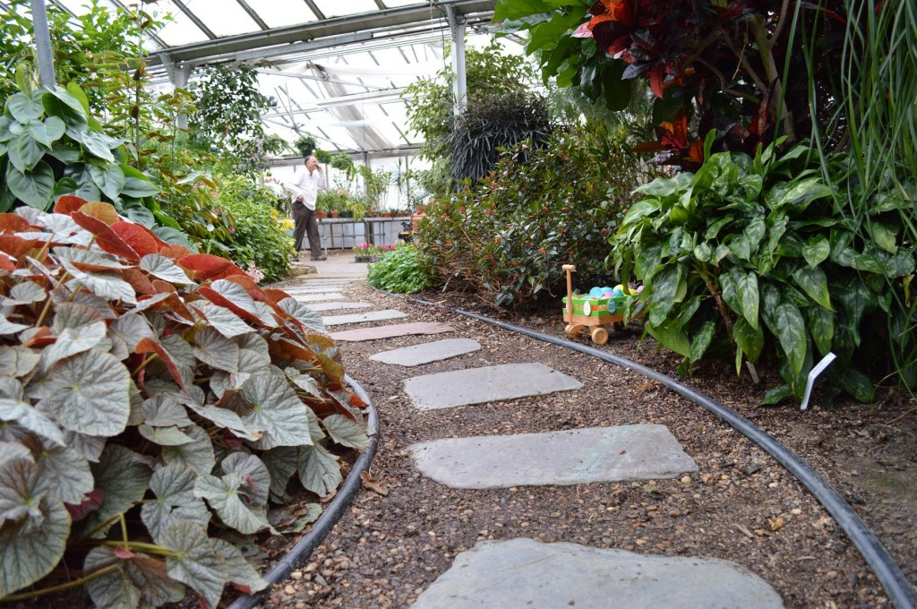 Stones create a pathway inside the Noelridge Greenhouse in Cedar Rapids, Iowa. Visitors could tour the greenhouse for free during the annual Easter Showcase. (photo/Cindy Hadish)