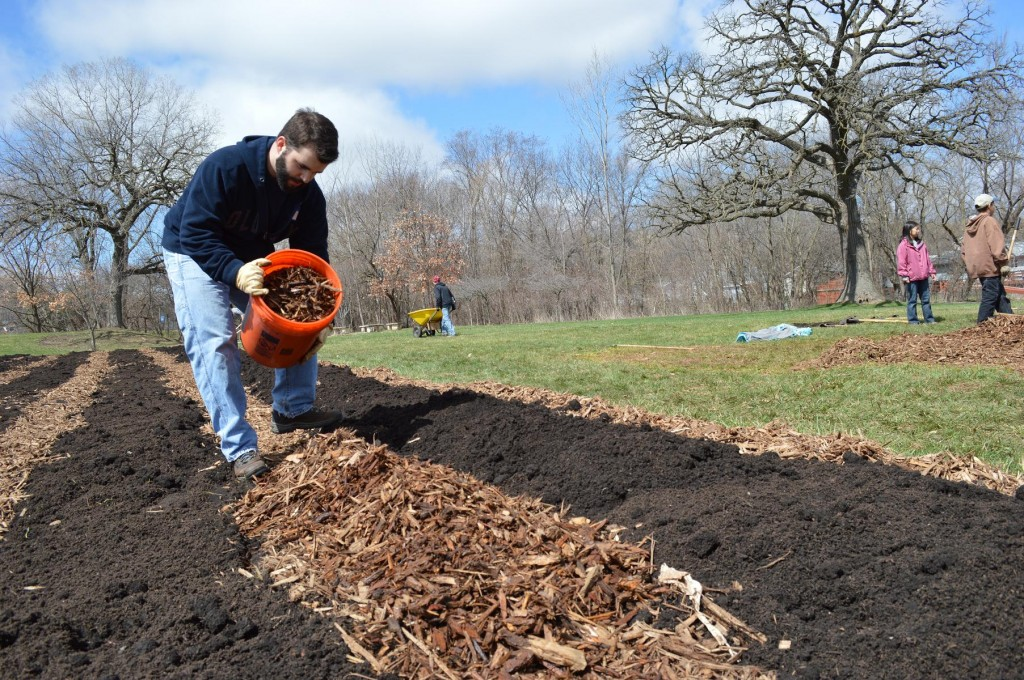 Caleb Suydam pours wood chips onto a path between rows at the Harrison Elementary School garden. Suydam was among students from the University of Dubuque who volunteered to help Matthew 25 build the school's first garden. (photo/Cindy Hadish)