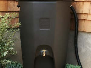 """The """"Moby"""" rain barrel, with a 65-gallon capacity, was previously sold by the Indian Creek Nature Center. The center is now offering other styles for sale. (photo/Rain Water Solutions)"""
