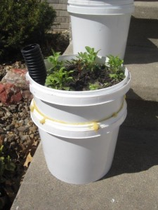 These self watering pots will be sold during the Benton County Master Gardener Extravaganza and Plant sale on Saturday, May 11, 2013. (photo/Kathy Janss)