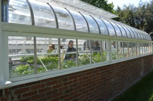 The restored Lord & Burnham Greenhouse was the center of the annual Brucemore plant sale on Saturday, May 11, 2013. (photo/Cindy Hadish)