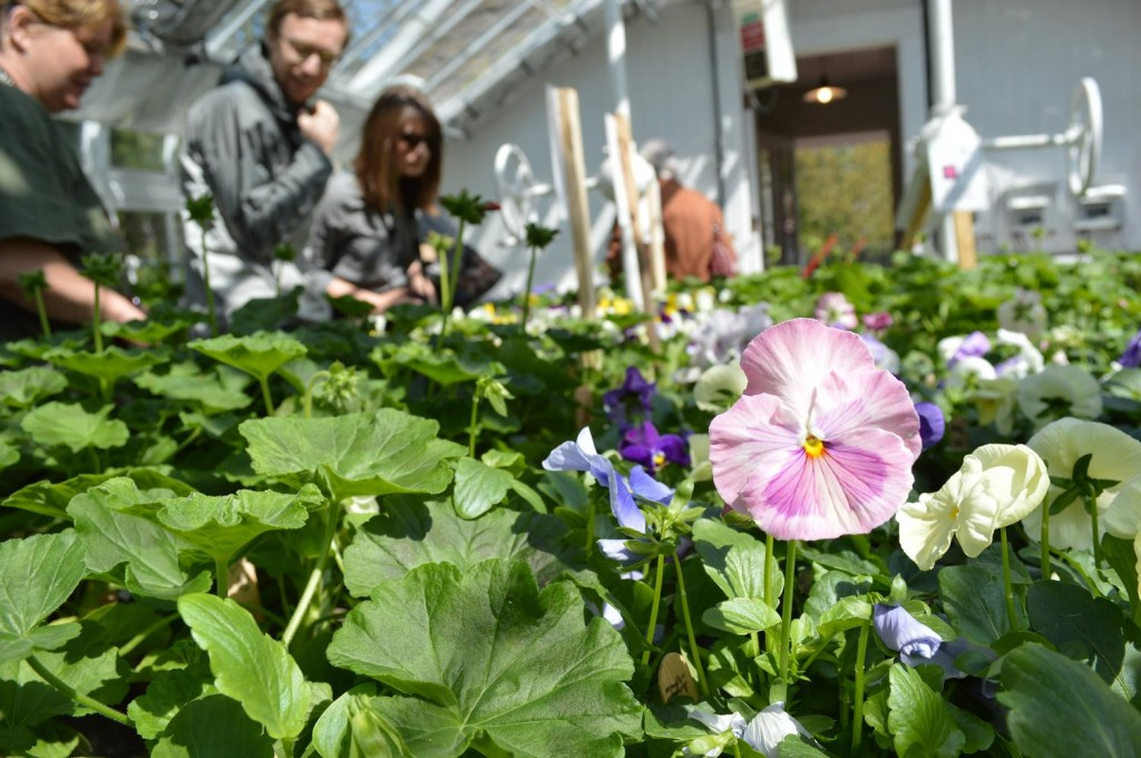 Customers shop for flowers inside the Lord & Burnham Greenhouse on the Brucemore estate in Cedar Rapids. (photo/Cindy Hadish)