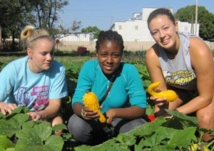 Students from Mount Mercy University help harvest squash at the Matthew 25 urban farm in Cedar Rapids in August 2012. (photo courtesy of Matthew 25)
