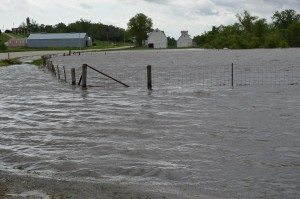 Floodwaters cover this field near Chelsea, Iowa, on Thursday, May 30, 2013. Tama County is one of a number of Iowa counties experiencing flooding this week. (photo/Cindy Hadish)