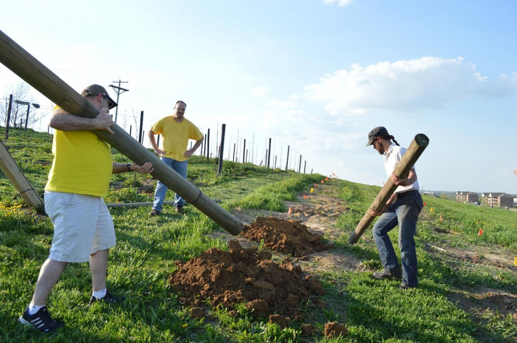 """Posts are placed at least 6 feet apart to build the """"H"""" frame trellis system in the Kirkwood vineyard. (photo/Cindy Hadish)"""
