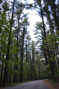 Iowa woodlands shrinking; first time in nearly 40 years the state has fewer acres