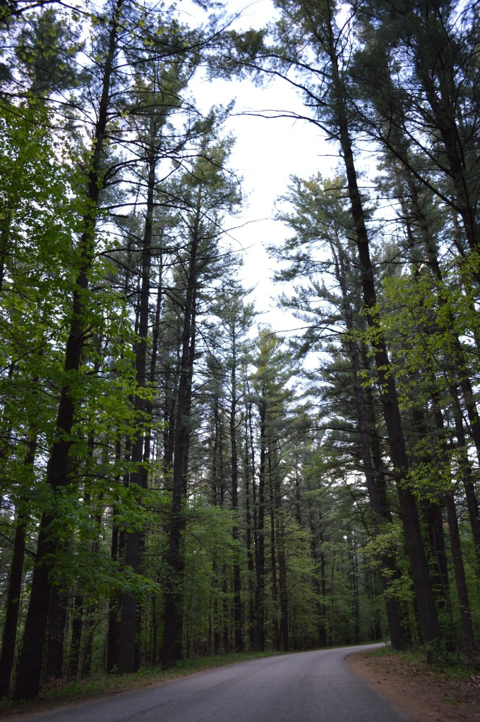 Iowa gives axe to Forestry Bureau; tree advocates respond