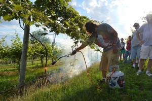 Students in the Kirkwood Community College viticulture class watch as a classmate uses a propane torch for weed control in the vineyard in June 2013. (photo/Cindy Hadish)