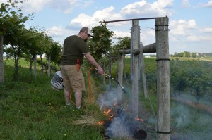 A propane torch can be used as an organic method of weed control in the vineyard, as shown at Kirkwood Community College in June 2013. (photo/Cindy Hadish)