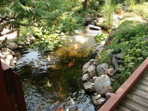 Koi for a Cause to benefit HACAP Food Reservoir