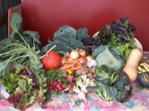 Fresh produce is shown that is used for the Abbe Hills Farm CSA. (photo/courtesy Laura Krouse)