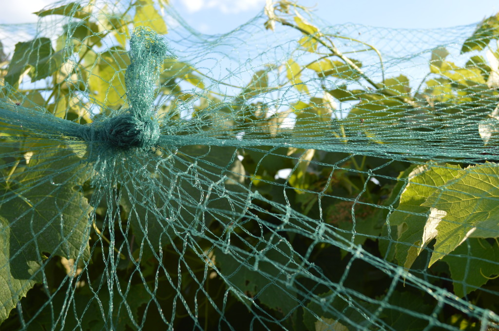 If you don't have a Tapener handy, holes can be repaired by tying the netting. (photo/Cindy Hadish)