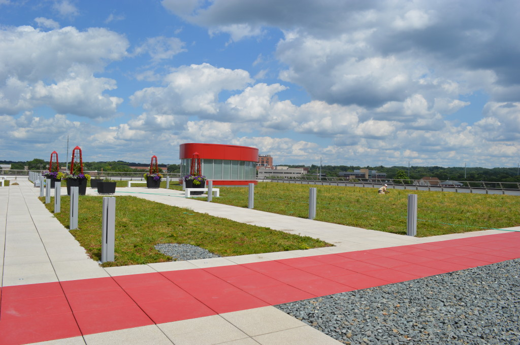 Sedum was planted as a low-maintenance groundcover on the library's green living/learning roof, shown Wednesday, July 24. The green roof is one of several sustainable measures built into the new Cedar Rapids Public Library. (photo/Cindy Hadish)