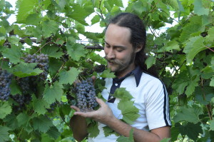 Viticulture instructor, Lucas McIntire, is shown in the Kirkwood Community College vineyard before grape harvest in mid-August. (photo/Cindy Hadish)