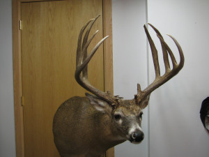 Iowa man assessed maximum for poaching world-class trophy deer