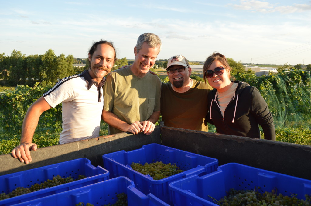 Part of the Kirkwood Community College viticulture class surrounds the harvest of Frontenac Blanc in August 2013, in Cedar Rapids, Iowa. (photo/Cindy Hadish)
