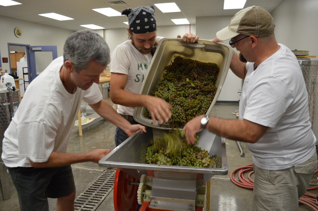 Frontenac Blanc grapes are poured into a field presser at Kirkwood Community College. (Photo/Cindy Hadish)