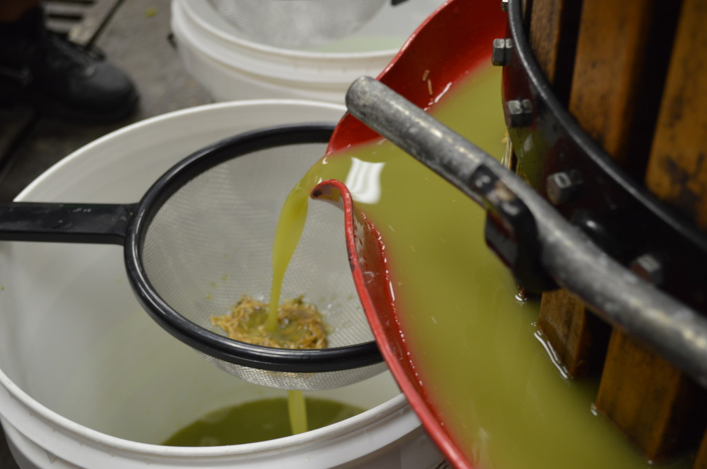 Grape juice flows from the press through a strainer to separate the rice hulls and grape skins. (photo/Cindy Hadish)