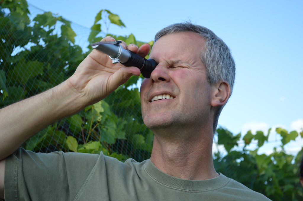 A refractometer is held to the sunlight to check the sugar level in the grapes. (photo/Cindy Hadish)