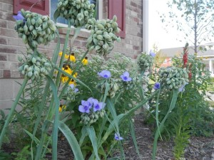 Native plant yard tour set for Sept. 15 in Iowa City