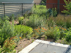 Rain garden photo/Wikipedia