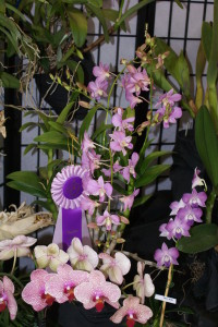 Regional orchid show in Cedar Rapids to include hands-on workshops, judged exhibits and plant sales