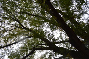 TreeKeepers program offers timely opportunity to learn tree stewardship
