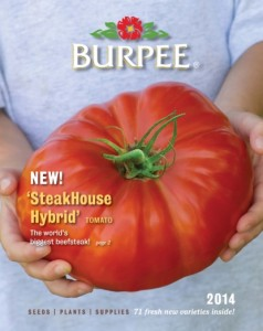 Biggest tomato, ever – the SteakHouse – is latest plant innovation