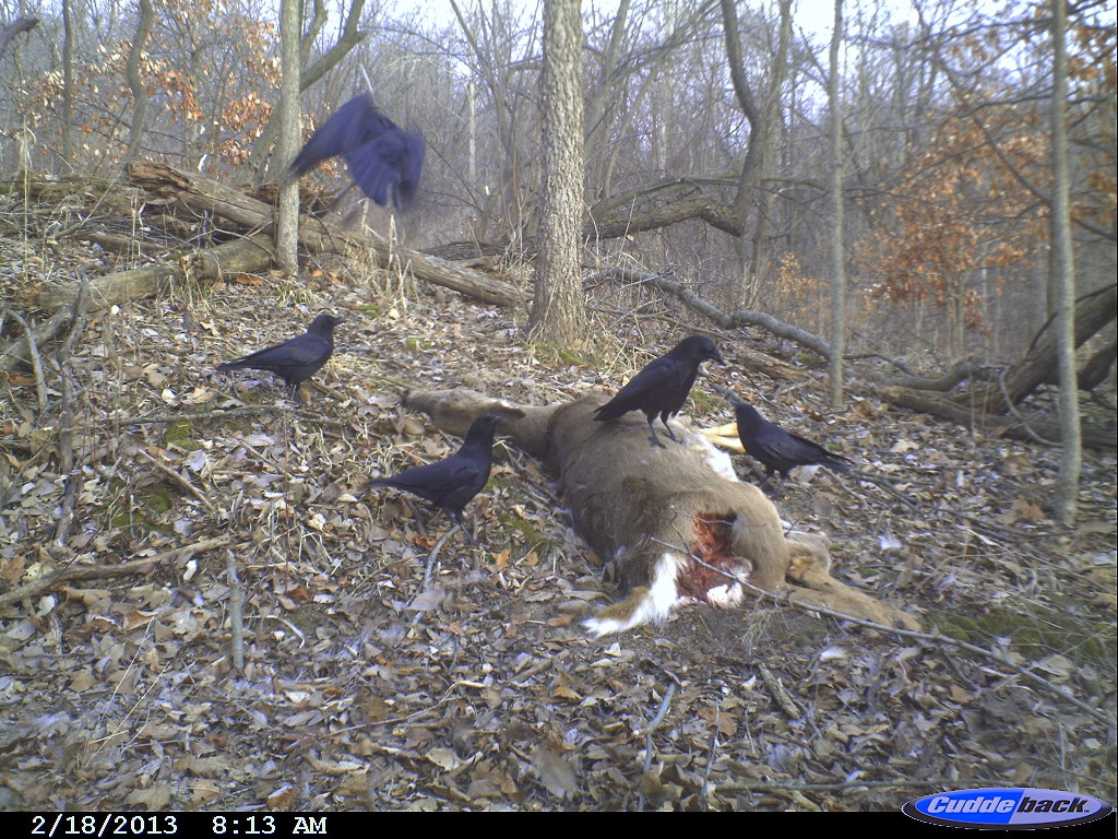 The circle of life is shown through scenes shot by the Indian Creek Nature Center's trail cameras. (photo/Indian Creek Nature Center)