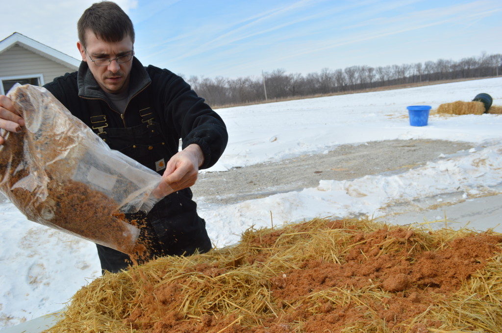 Todd Mills prepares the growing medium for the mushrooms outside his rural Columbus Junction home. Mushroom spawn is inoculated on straw that has been pasteurized in 55-gallon drums outside, with super- fine sawdust, oats and wood chips also used in the growing process. (photo/Cindy Hadish)