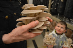 Business is mushrooming for Iowa grower