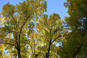 How to celebrate Arbor Day in Eastern Iowa
