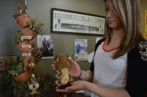Houby Days 2014 photo gallery: morel mushrooms and more