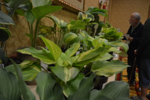"Photo gallery: Hosta lovers ""Czech out"" Cedar Rapids during national convention"