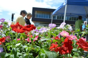 Customers look at petunias and other plants sold by Fairfax Greenhouse during last year's Downtown Farmers Market. (photo/Cindy Hadish)