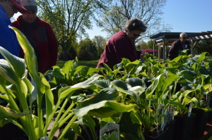 Hooked on hostas: Convention brings international attention to shade-loving plants in Iowa
