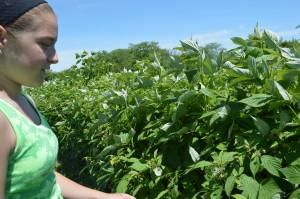 Cierra Lacina shows the family's raspberry plants earlier this summer. (photo/Cindy Hadish)