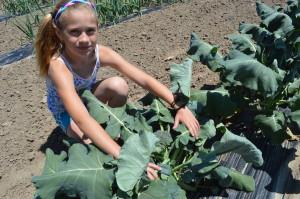 Dakota Lacina shows off some of Northern Ridge's many vegetable plants at the farm in rural Oxford, Iowa. (photo/Cindy Hadish)