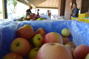 Apples are sold during the Marion Farmers Market under the shelter of the depot in 2013. The market has ended on Wednesdays, but will continue on Saturdays. (photo/Cindy Hadish)