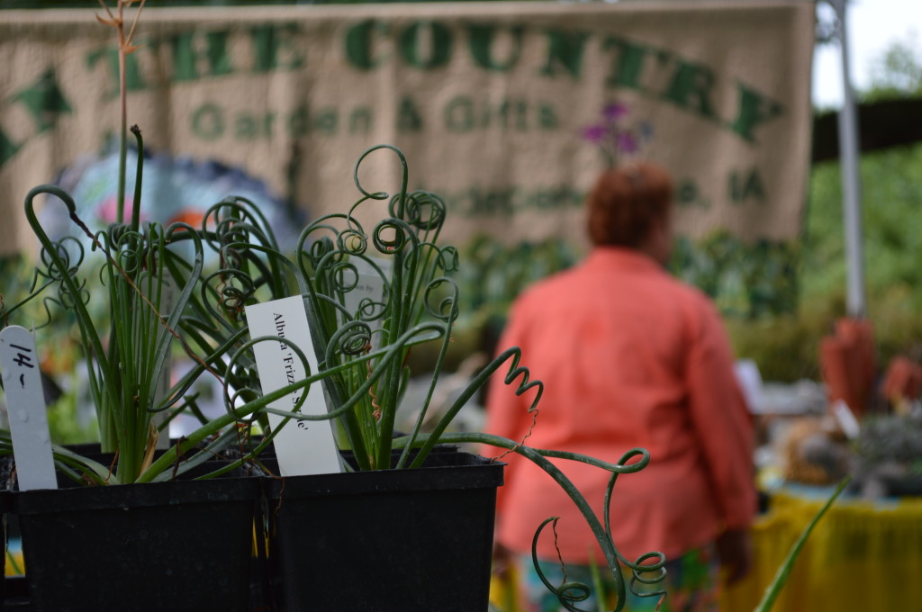 In the Country Garden & Gifts of Independence offered unusual succulents for sale. (photo/Cindy Hadish)