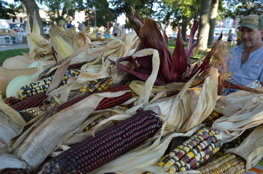 """Your squirrels gotta eat,"" Joel Anderson says of the ornamental corn he was selling Thursday, Sept. 18, at the Washington Farmers Market. (photo/Cindy Hadish)"