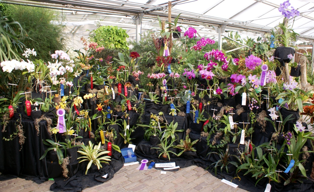 Eastern Iowa Orchid Society exhibit and people's choice award. (photo/Eastern Iowa Orchid Society)