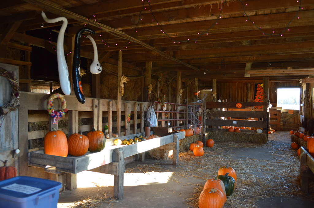 The barn is decorated for the season where pumpkins are sold outside of Chelsea, Iowa, (photo/Cindy Hadish)