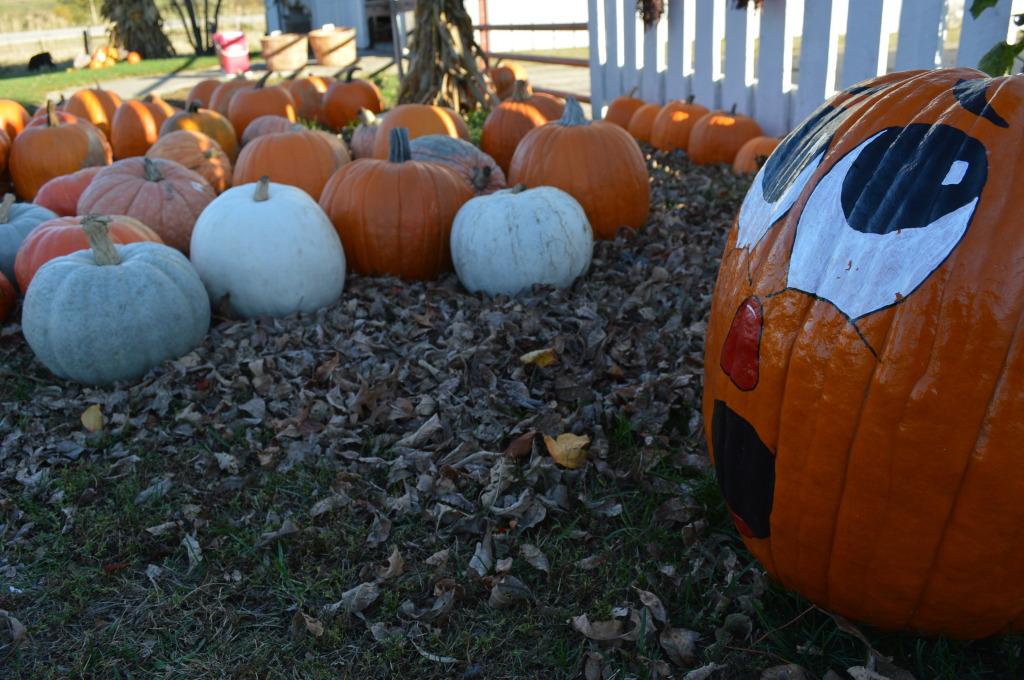 Pumpkins are displayed for sale at a rural Chelsea farm on Oct. 25, 2015. (photo/Cindy Hadish)