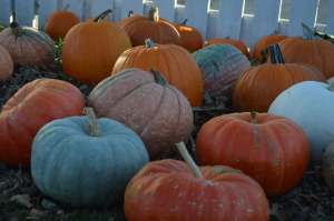 Spooky Halloween forecast: hard freeze predicted in Iowa