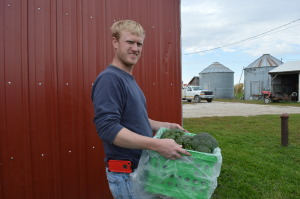 Jason Grimm carries part of his fall broccoli harvest at his family's farm near Williamsburg. (photo/Cindy Hadish)