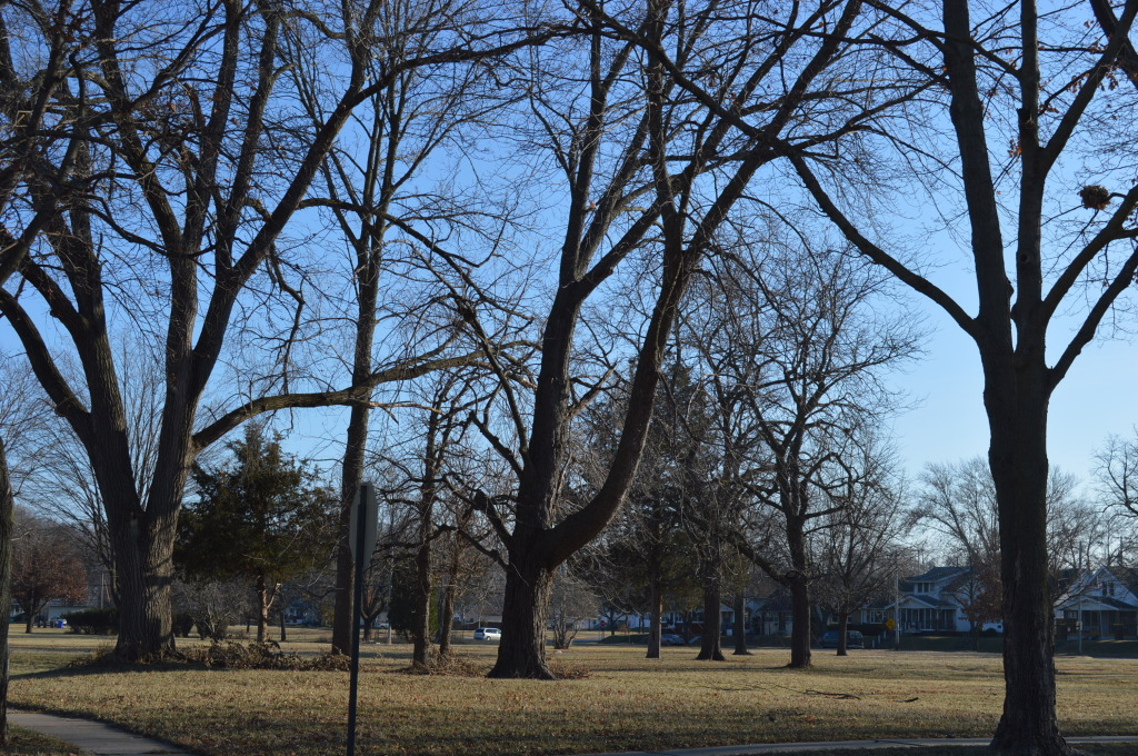 "This group of trees, shown in December 2014, is at risk of removal in the Czech Village neighborhood under the Cedar Rapids ""greenway parks system"" plan. (photo/Cindy Hadish)"